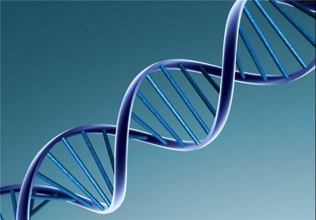 با تغذیه صحیح، از آسیب به DNA جلوگیری کنید