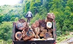 کشف 30 تن چوب قاچاق در آوج