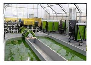 تولید جلبک خوراکی در قشم