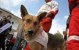 مهارت سگ امدادگر در ماساژ قلبی!