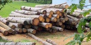 کشف یک تن چوب جنگلی قاچاق در بروجن