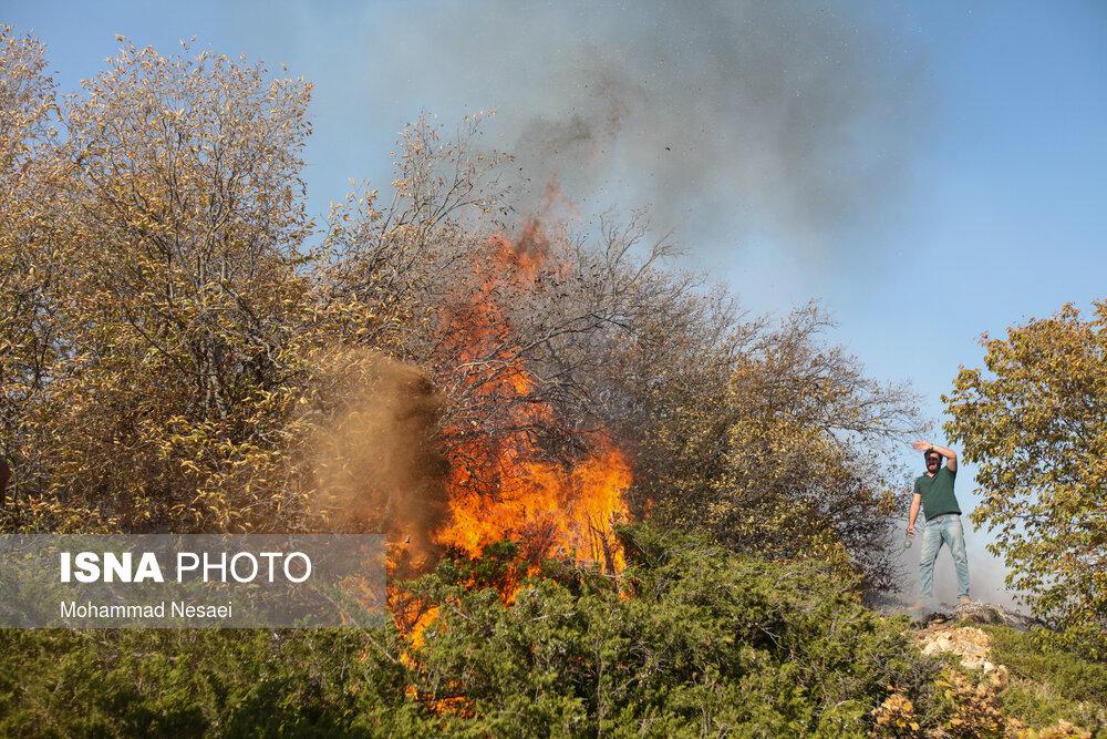عکس/ آتش بلای جان جنگل های کردکوی شد