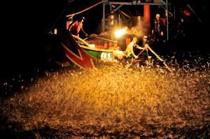ماهیگیری با آتش در تایوان!