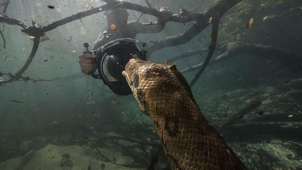 رویارویی غواصان شجاع با آناکوندای 7 متری!