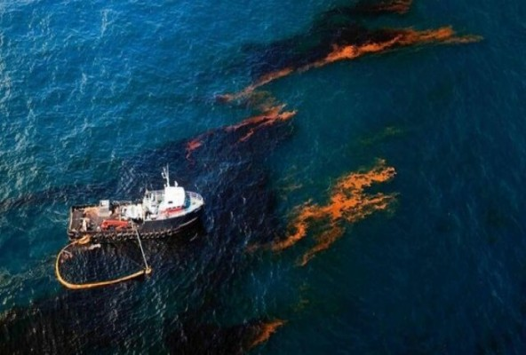 سایه مرگبار آلودگی های نفتی بر سر آبزیان خلیج فارس