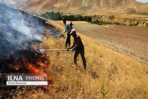 حدود ۲ هکتار از اراضی جنگلی ارتفاعات سفیدکوه در آتش سوخت
