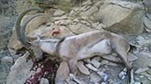 محکومیت سنگین شکارچی حیات وحش در لرستان