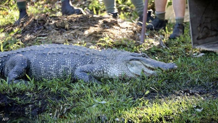 4گوشه دنیا/ ضد حمله مادربزرگ شجاع به حمله تمساح!