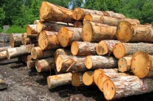 ۱۰ تن چوب قاچاق در قزوین کشف شد
