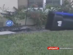 نحوه گرفتن یک تمساح با سطل زباله در فلوریدای آمریکا