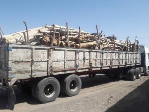 کشف چوب اکالیپتوس قاچاق در نَرماشیر