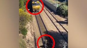 تلاش نفس گیر مرد برای نجات سگ قبل از رسیدن قطار