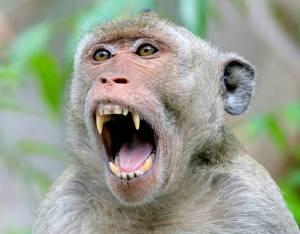 لحظه دیدنی دزدیدن کیک توسط میمون