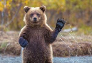 فیلمی جالب از شیپور نوازی خرس با استعداد
