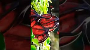 گیاه عجیب «اودو پاوی» با شایعاتش فقط یک پویانمایی خلاقانه بود!