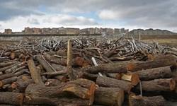 کشف ۱۵ تن چوب جنگلی قاچاق در سرخه