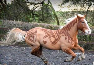 هنرنمایی با تراشیدن پشم بدن حیوانات!