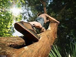این هم یک خلاقیت دیدنی برای بالا رفتن از درخت