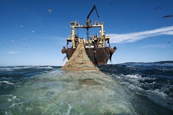 شروع مجدد صید ترال در دریای عمان