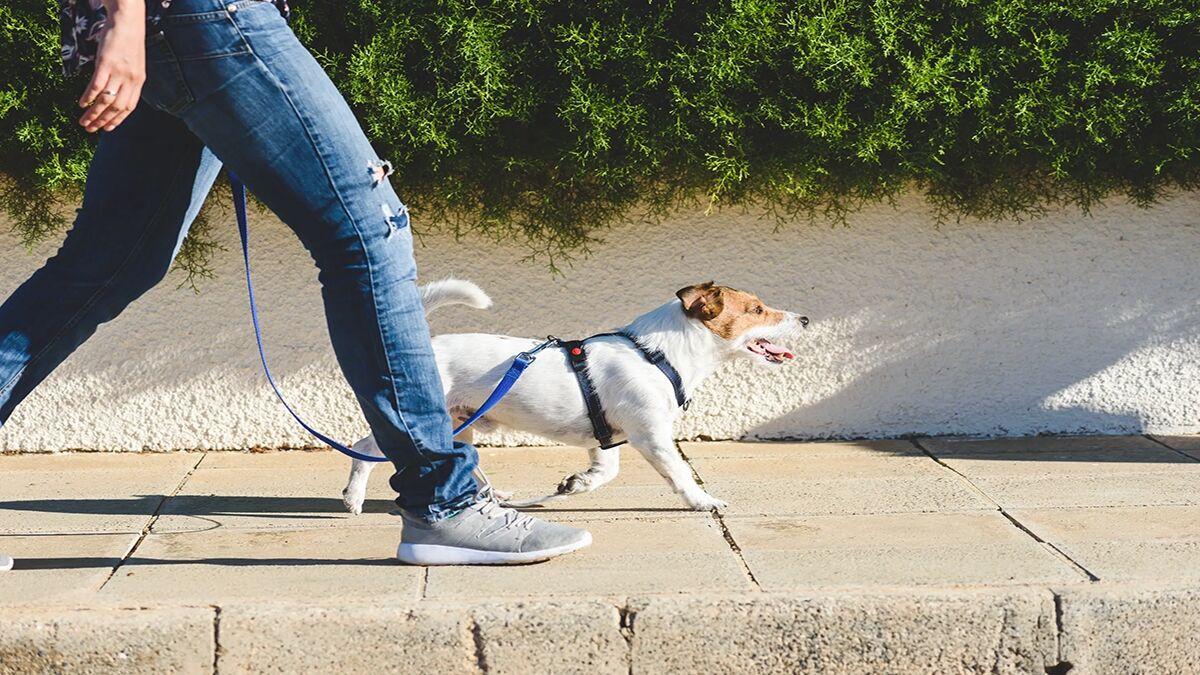 هشدار دادستان دلیجان نسبت به سگگردانی در معابر عمومی