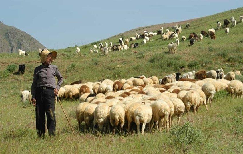۷۰ هزار رأس دام عشایر آذربایجانغربی به صورت تضمینی خریداری میشود