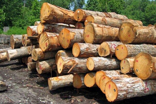 جریمه قاچاق چوب و زغال در چهارمحال و بختیاری افزایش یافت
