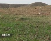 خسارت ۶ هزار میلیاردی خشکسالی به کشاورزی کردستان