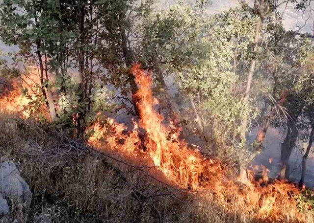 آتشسوزی در جنگلهای گناوه لری گچساران