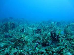 تاثیر برف دریایی بر تعادل جهانی دی اکسید کربن