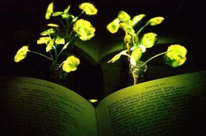 گیاهان درخشان جایگزین چراغهای معمولی میشوند