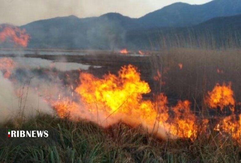 تداوم آتشسوزیهای سریالی نیزارهای دریاچه زریبار