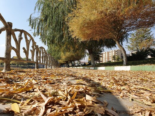 برگهای پاییزی در ۴ نقطه شهر ارومیه جمعآوری نمیشود
