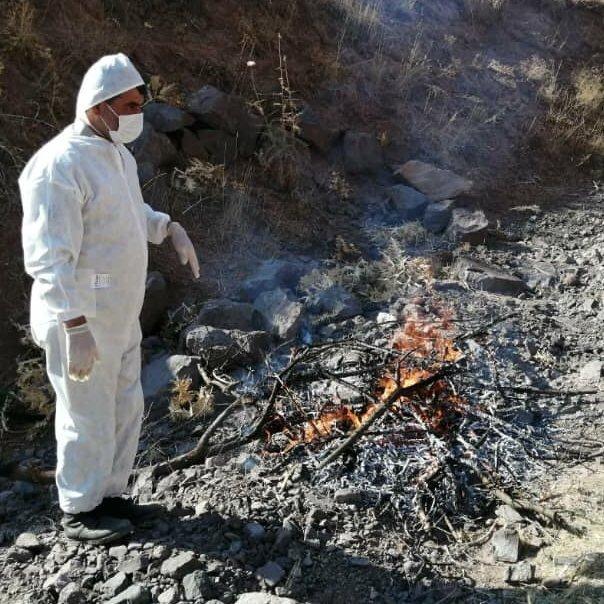 کشف لاشه ۹ کل و بز وحشی تلف شده بر اثر طاعون نشخوارکنندگان