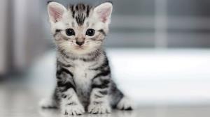 گربه باهوشی که ادای صاحبش را در می آورد!