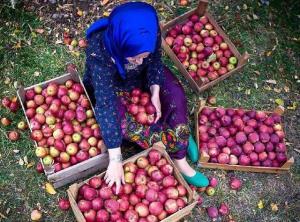 پروانه گردشگری کشاورزی در ۴ شهر آذربایجانشرقی صادر شد