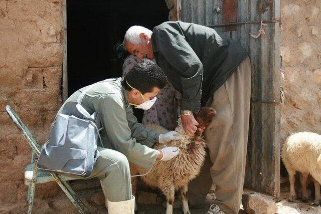 موردی از «طاعون نشخوارکنندگان» در کهگیلویه و بویراحمد گزارش نشده است