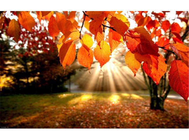 تابش آفتاب پاییزی تا پایان هفته در مازندران