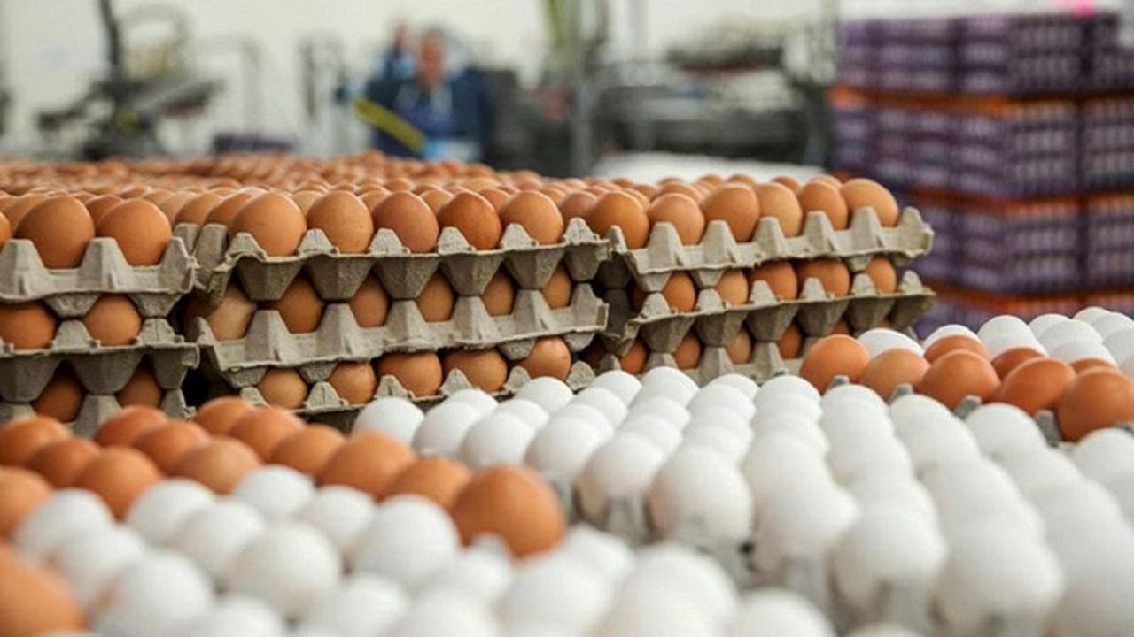 آیا تخممرغ باز هم در اصفهان گران میشود؟