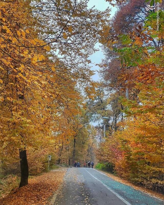 عکس/ طبیعت زیبای پاییزی جنگل النگدره