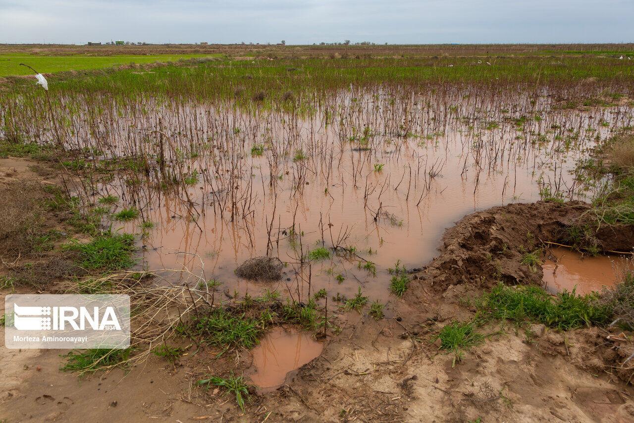 حوادث بیش از ۳۰ هزار میلیارد ریال به کشاورزان خراسان شمالی خسارت زد