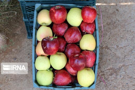 فواید ضدسرطان پوست سیب