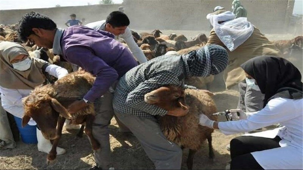 خوزستان عاری از طاعون نشخوارکنندگان