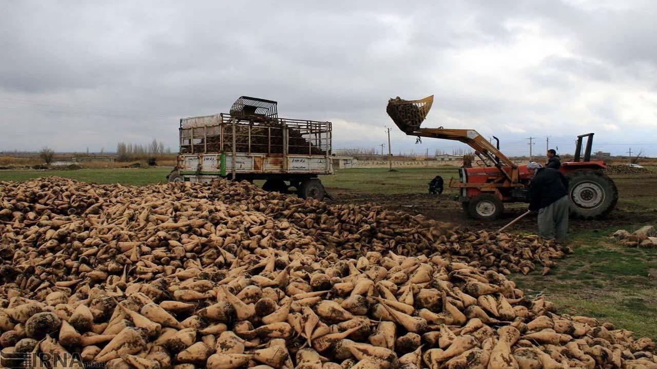 کارخانه قند شیروان خرید چغندر از کشاورزان خراسان شمالی را آغاز کرد