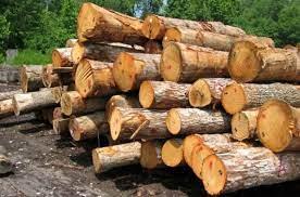یه لایه فوق العاده نازک از چوب
