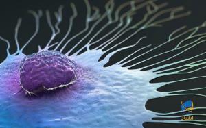 سلولهای سرطانی چگونه در بدن پخش میشوند؟