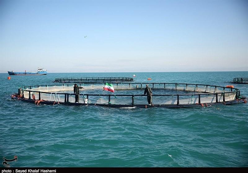 طرح پایلوت پرورش ماهی در قفس در کیاشهر گیلان اجرا میشود