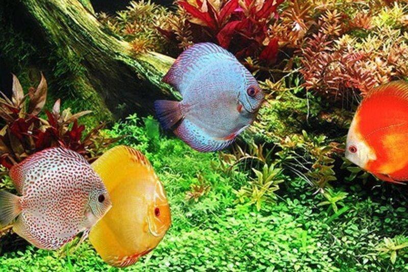 تولید ماهیان زینتی در آذربایجانشرقی ۱۲۵۰ فرصت شغلی ایجاد کرد