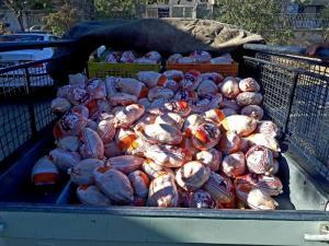 کشف ۳ محموله مرغ فاقد مجوز در بیجار
