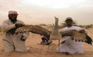 پرنده ایرانی اسیر خوشگذرانی شیخ نشینهای عرب!