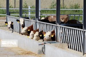 ۶ واحد تولیدی کشاورزی راکد سرعین تا پایان سال فعال میشود